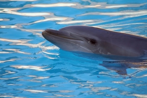 This dolphin is actually a capo in the dolphin mafia.Photo: © Agno_agnus | Stock Free Images